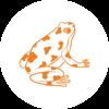 Pastille_grenouille
